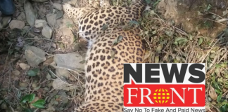 cheetah poison dead body recovered