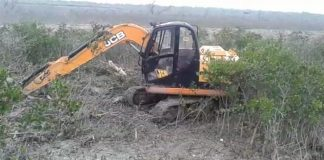 Destruction of mangrove is Continue