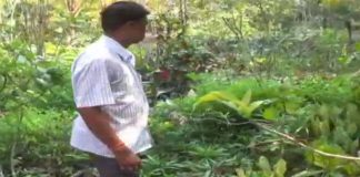 various trees in nursery for protect the bashundhara