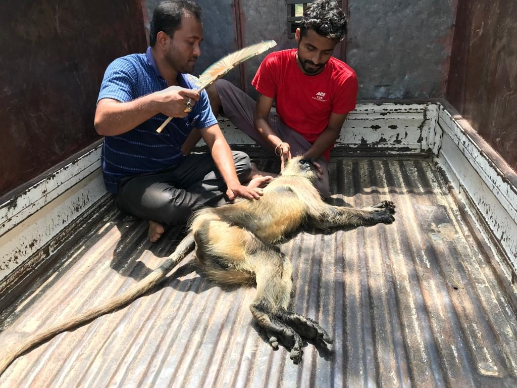 the monkey dead on road accident