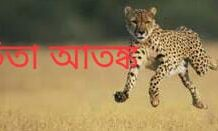 again the panic of cheetah