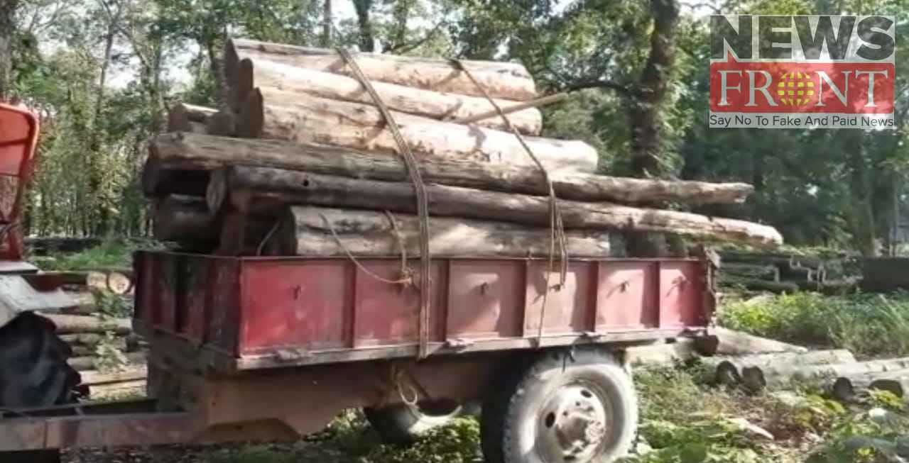 Rescued smuggle wood