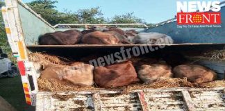 detention Cow loaded truck arrested five