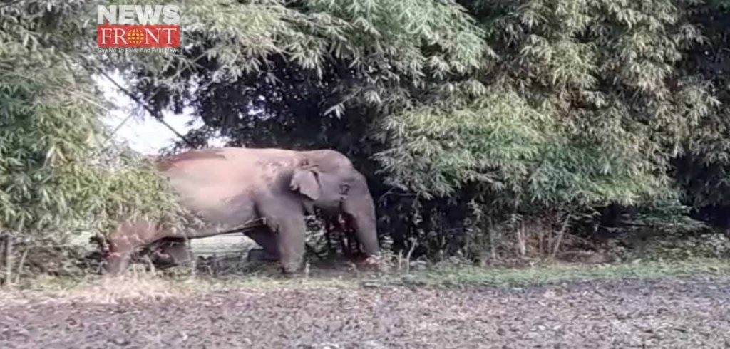 the elephant attack in village