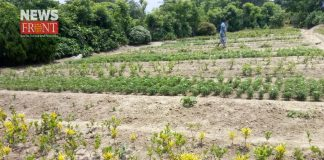 the farmer of nursery to loss for heavy temperature