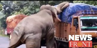 elephant attack on a track in search of food
