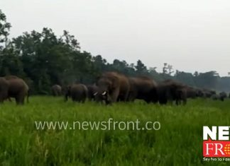elephant destroyed paddy field | newsfront.co