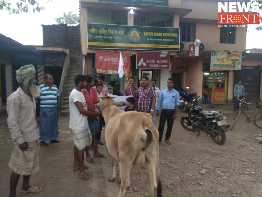 Demand for Gold Loan for Cows