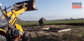 baby elephant fall into water | newsfront.co