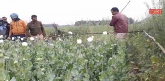 police damage illegal poppy cultivation in chandrakona | newsfront.co