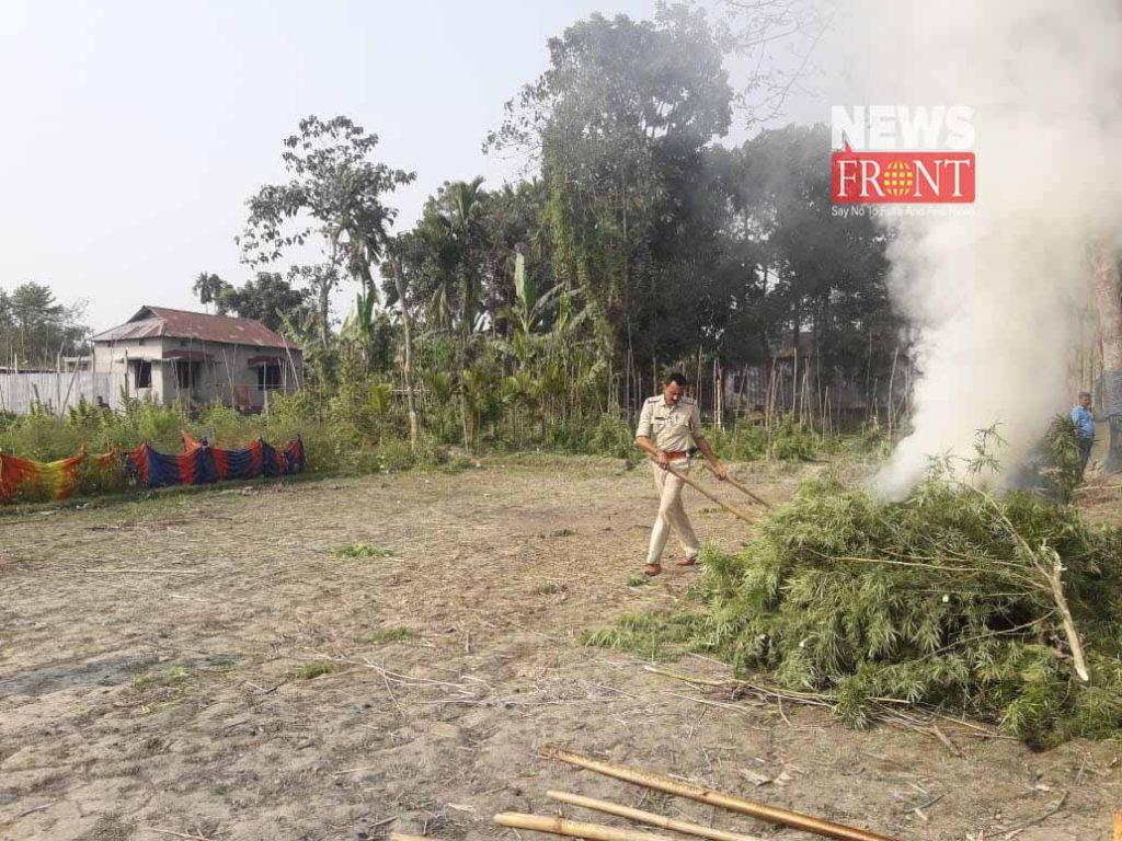 police destroyed ganja tree in dinhata | newsfront.co