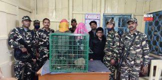 pangolin smugglers | newsfront.co
