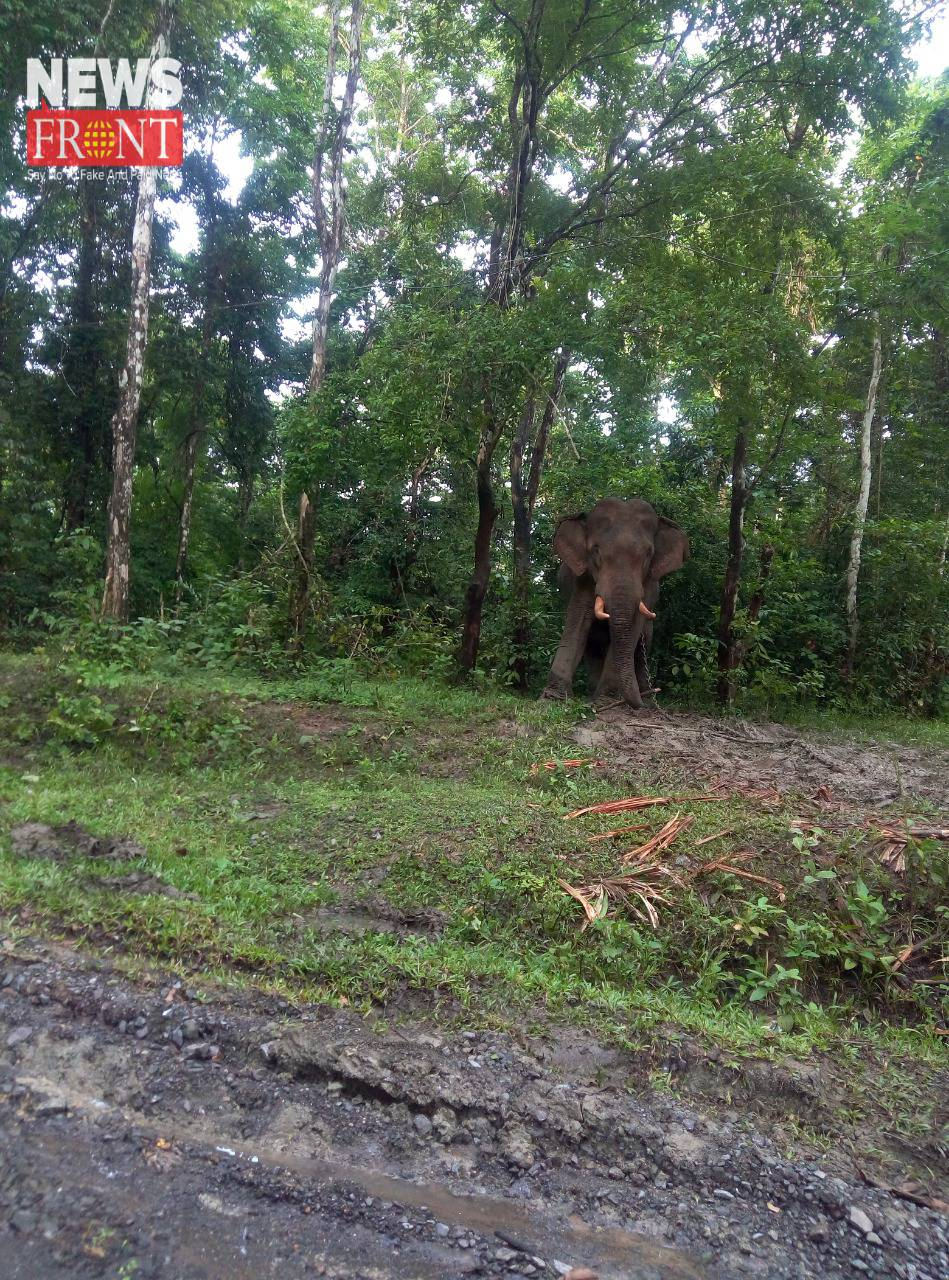 elephant in forest | newsfront.co