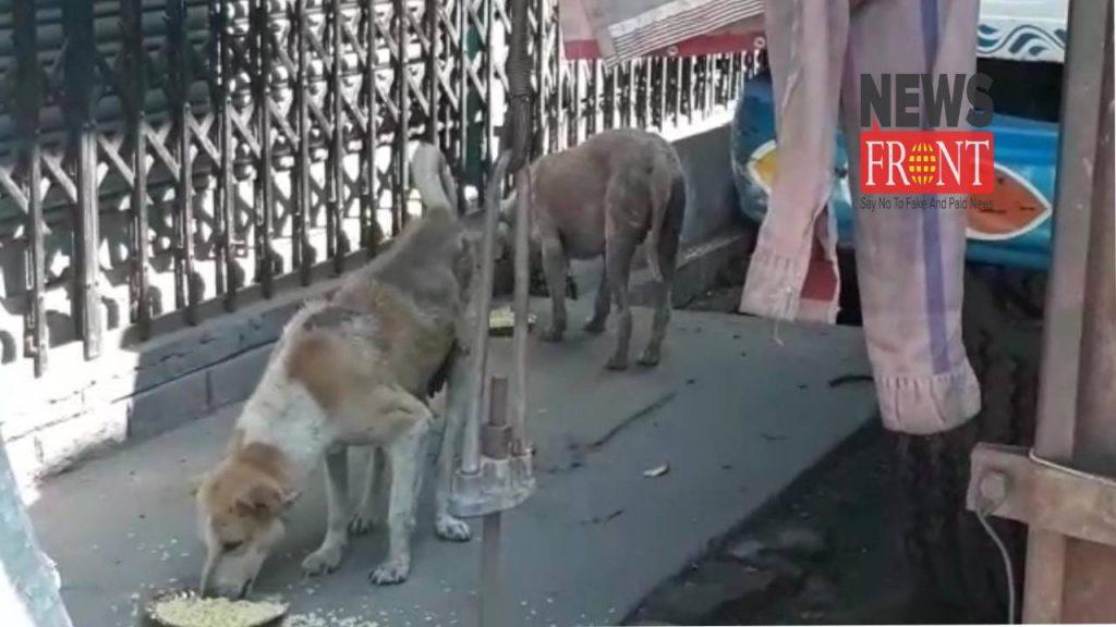 dog |newsfront.co