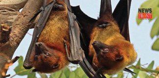 Bat | newsfront.co