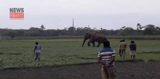 elephant attack | newsfront.co
