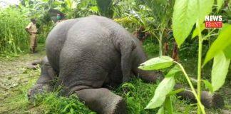 Dead elephant   newsfront.co