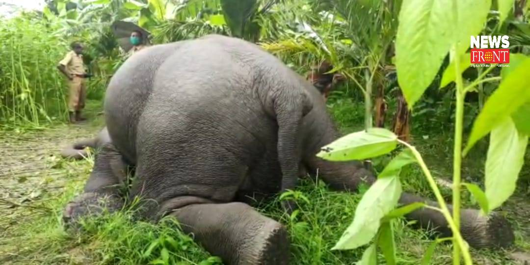 Dead elephant | newsfront.co