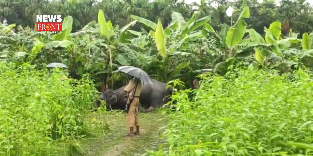 elephant rescue | newsfront.co