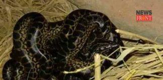 Anaconda | newsfront.co