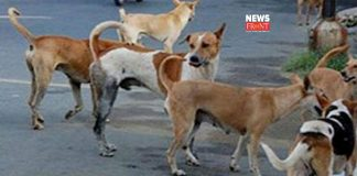 Dog meat | newsfront.co