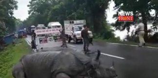 Rhinoceros | newsfront.co
