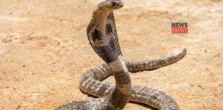Poisonous Snake | newsfront.co