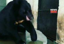 Black Bear | newsfront.co