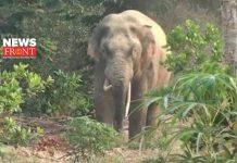 elephant   newsfront.co
