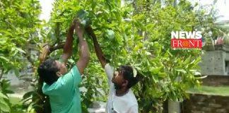 saplings made | newsfront.co