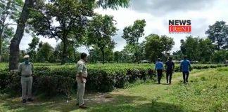 tea garden | newsfront.co
