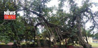 tree   newsfront.co