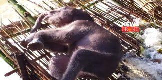 Baby elephant | newsfront.co