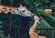 Wild animal | newsfront.co