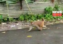 monkey   newsfront.co