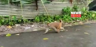 monkey | newsfront.co