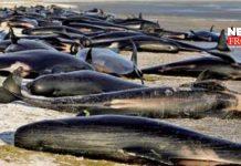 whale | newsfront.co