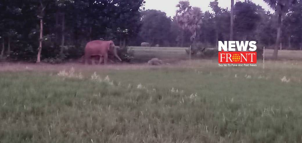 Elephant attack | newsfront.co