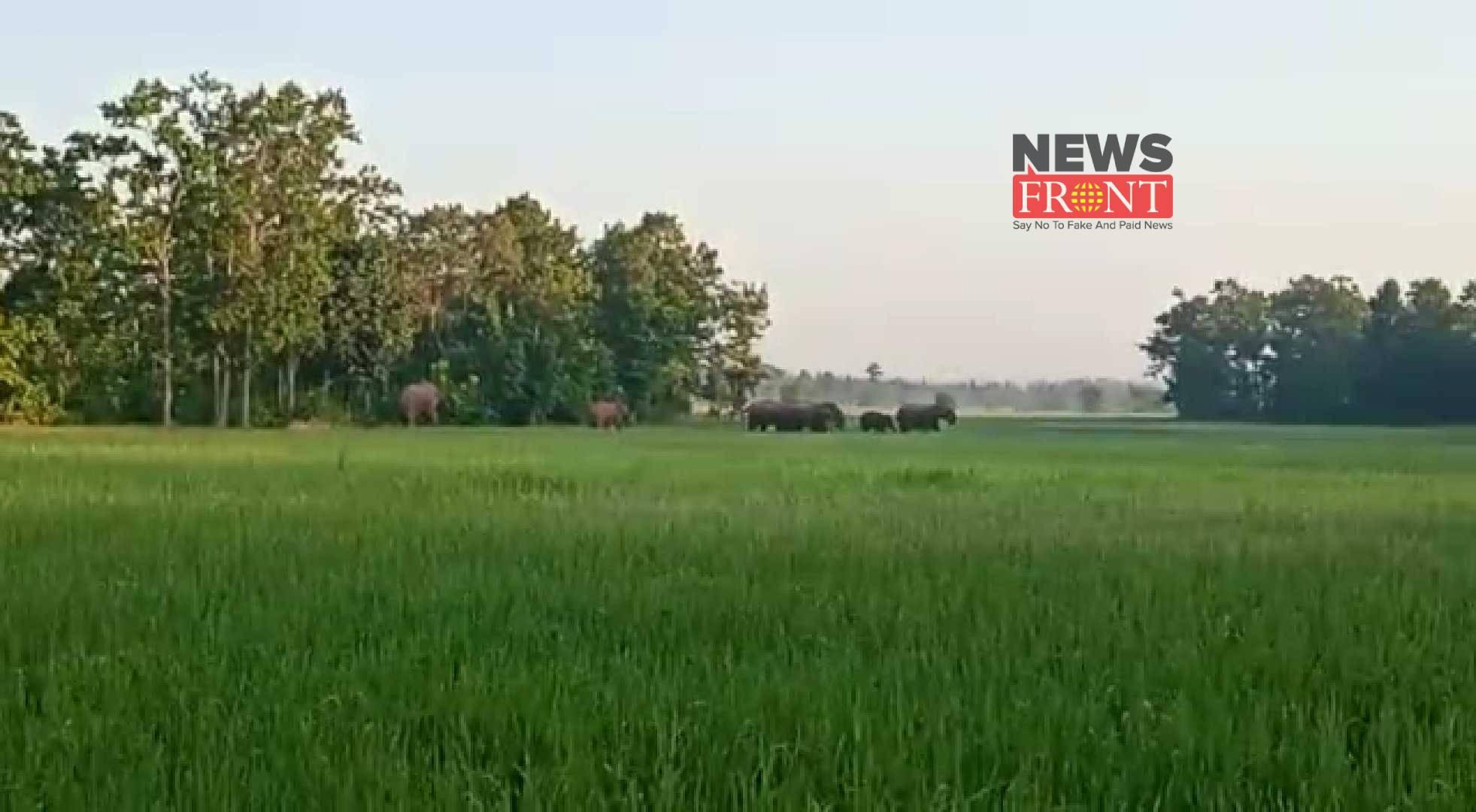 elephant | newsfront.co