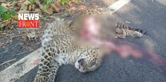 leopard body | newsfront.co