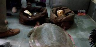 Tortoise rescue | newsfront.co
