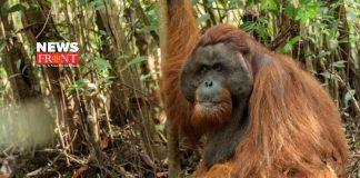 Chimpanzee | newsfront.co