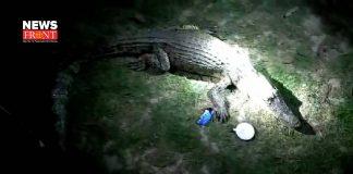 Crocodile rescue | newsfront.co