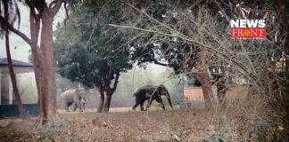 Elephant attack   newsfront.co