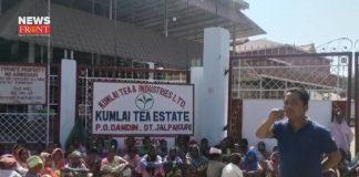 Kumlai Tea Estate | newsfront.co