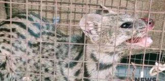 wildcat | newsfront.co